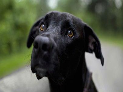 cachorro-perdido-wallpaper-24211
