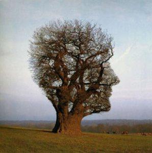 mente-humana2_c3a1rvore